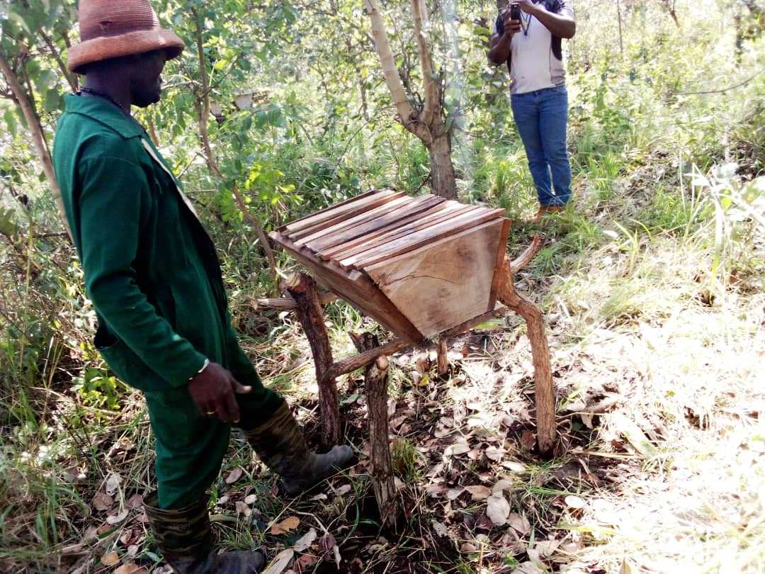 KTBH's are placed on stands to protect the bees from ants and the hives themselves from termites. The legs of the stands are usually treated with the dregs from shea butter production which helps to prevent insects from ascending.