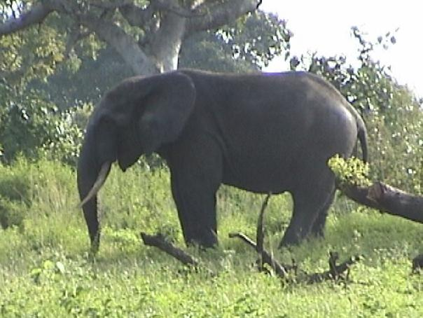 animals_elephant_2.jpg