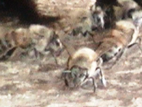 /bee_field_bees_at_hive_entrance_Kawan_Kura_2.jpg