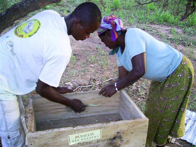 bee_training_afei_baiting_hives1